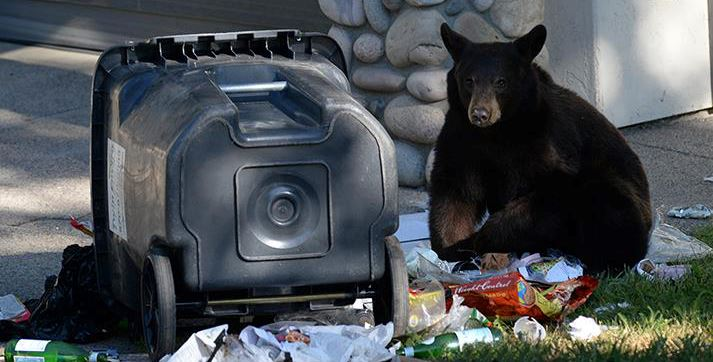 Bears-Trash