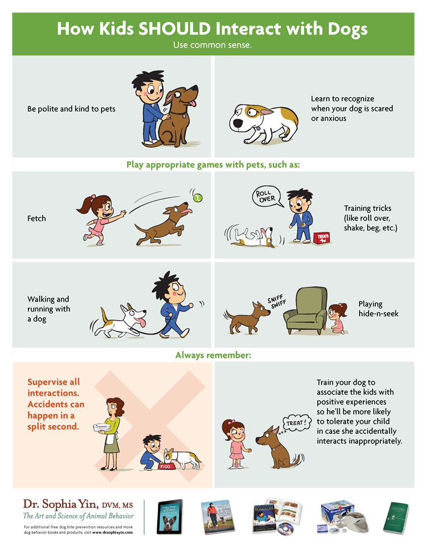 How Kids SHOULD Interact with Dogs