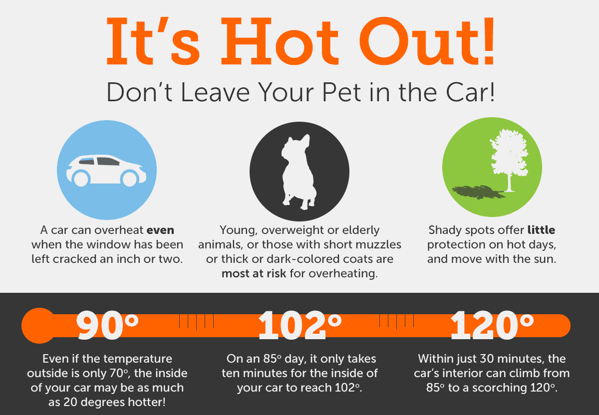 Hot Car Infographic Opens in new window