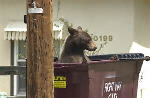 bear in dumpster.jpg