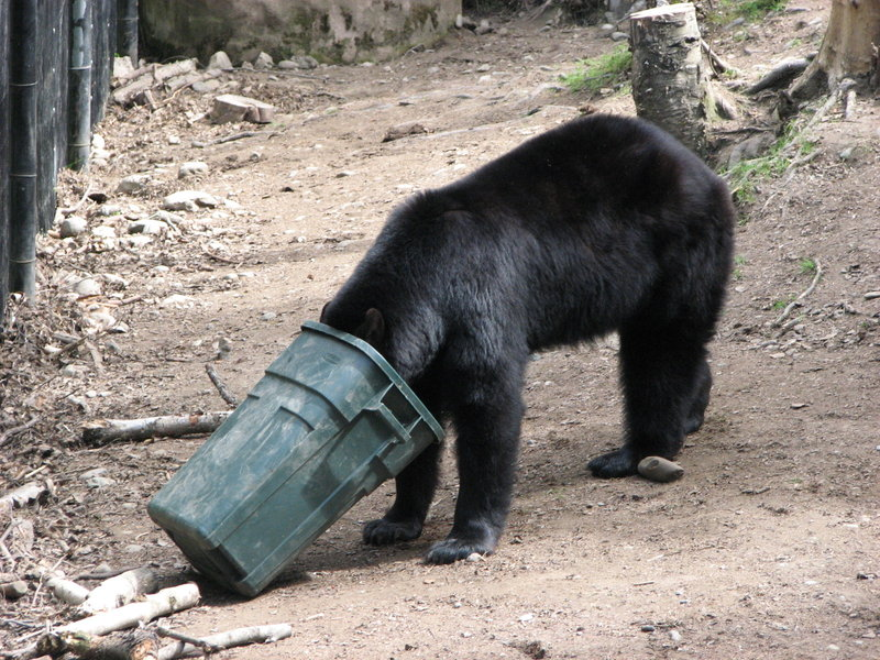 black bear and trash can by Fox Rachel