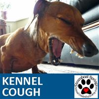 Kennel Cough.jpg_thumb.jpg
